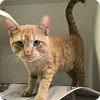 Adopt A Pet :: Sherbert - Newport, NC