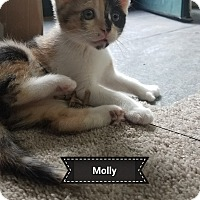 Adopt A Pet :: MOLLY - Millerstown, PA