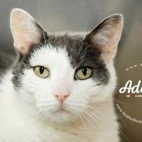 Adopt A Pet :: Abby - Lindenwold, NJ
