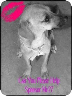 Chihuahua Mix Dog for adoption in Burbank, California - Bambi