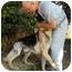 Photo 2 - German Shepherd Dog Mix Dog for adoption in Los Angeles, California - Dax von Malibu