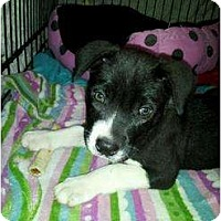 Adopt A Pet :: Riley - Rowlett, TX