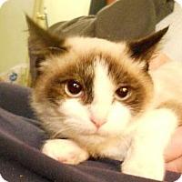 Adopt A Pet :: Ming - Sterling Hgts, MI