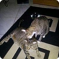 Adopt A Pet :: Kingston & Brutus - Fort Lauderdale, FL