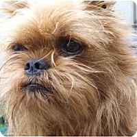 Adopt A Pet :: RUSTY - ADOPTION PENDING - Los Angeles, CA