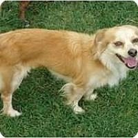 Adopt A Pet :: Fifi - Arlington, TX