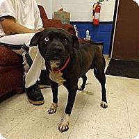 Adopt A Pet :: Razzle - Bloomsburg, PA