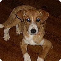 Adopt A Pet :: Bootsie - Morristown, TN