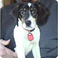 Adopt A Pet :: Marble - cedar grove, IN