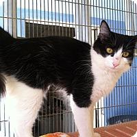 Adopt A Pet :: Anna - Newport Beach, CA