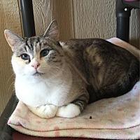 Adopt A Pet :: Cleo - Temecula, CA