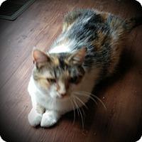 Adopt A Pet :: Willa - Fairborn, OH