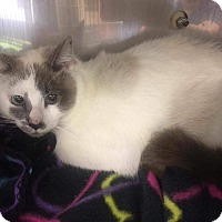 Adopt A Pet :: Alice - Fairborn, OH