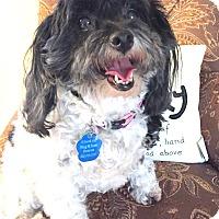Adopt A Pet :: Tess-Pending Adoption - Omaha, NE