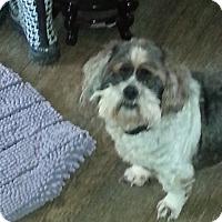 Adopt A Pet :: G-Paw - Dothan, AL