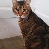 Adopt A Pet :: Zeke - Jackson, MO