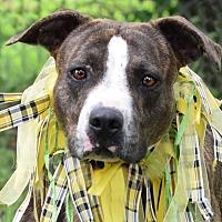 Adopt A Pet :: Jenny - Denver, CO