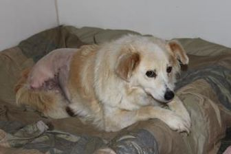 Collie Mix Dog for adoption in Athabasca, Alberta - Skype