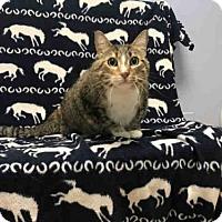 Adopt A Pet :: ELIZABETH - Fort Collins, CO