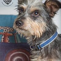 Adopt A Pet :: Charlie - Inglewood, CA