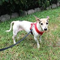 Adopt A Pet :: Mary - Boca Raton, FL