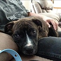 Adopt A Pet :: Carlos - Pending Adoption - Lancaster, PA