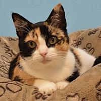 Adopt A Pet :: Charisma - Cincinnati, OH