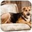 Photo 3 - German Shepherd Dog Mix Dog for adoption in Portland, Oregon - Jake