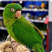 Adopt A Pet :: Sparky - Lenexa, KS