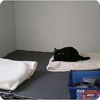 Adopt A Pet :: Iris - Elk Grove, CA