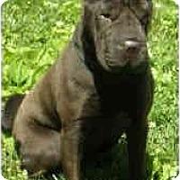 Adopt A Pet :: Koko - Bethesda, MD