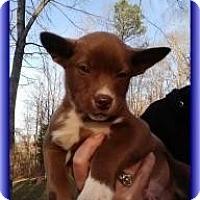 Adopt A Pet :: Brutus - Staunton, VA