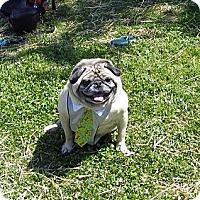 Adopt A Pet :: MILES - Warren, NJ