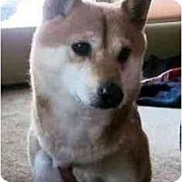 Adopt A Pet :: Pixie (Iowa) - Round Lake, IL