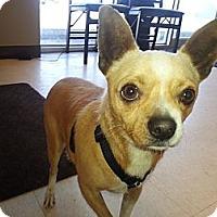 Adopt A Pet :: Manny - Calgary, AB