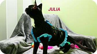 Domestic Shorthair Cat for adoption in Muskegon, Michigan - julia