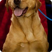 Adopt A Pet :: Samantha - Erwin, TN