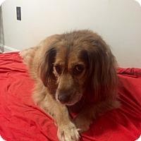 Adopt A Pet :: Sienna - Bristol, TN