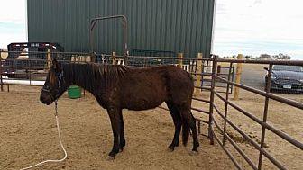 Grade for adoption in Boone, Colorado - Gypsy