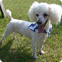 Adopt A Pet :: Garvy - Manning, SC