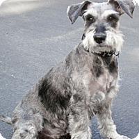 Adopt A Pet :: Axel (in adoption process) - El Cajon, CA