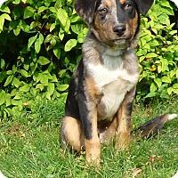 Adopt A Pet :: Sebastian - Bedminster, NJ