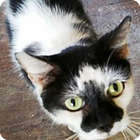 Adopt A Pet :: Boo *CL* - Independence, MO