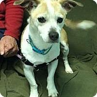Adopt A Pet :: Sloan - Manchester, CT