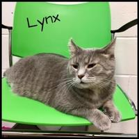 Adopt A Pet :: Lynx-Sponsored Adoption Fee - Jasper, IN
