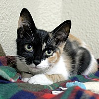 Adopt A Pet :: Guava - Troy, MI
