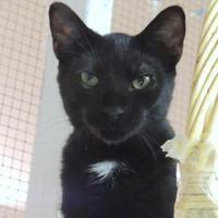 Adopt A Pet :: Spot - Westville, IN