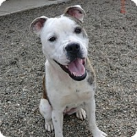 Adopt A Pet :: Patches - Sacramento, CA