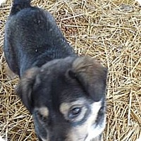 Adopt A Pet :: Faris (ADOPTED!) - Chicago, IL