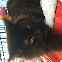 Adopt A Pet :: Minnie - West Dundee, IL